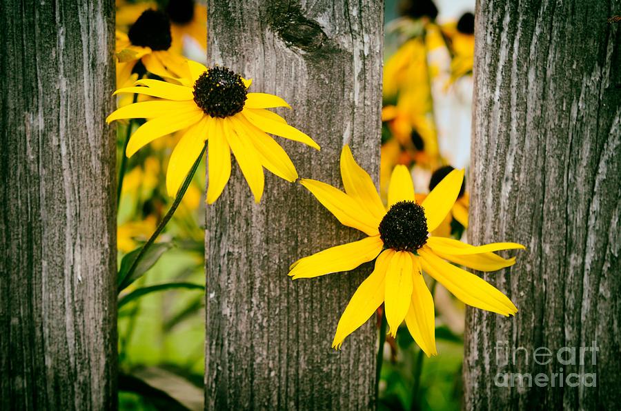 Bright Yellow Autumn Flowers Photograph