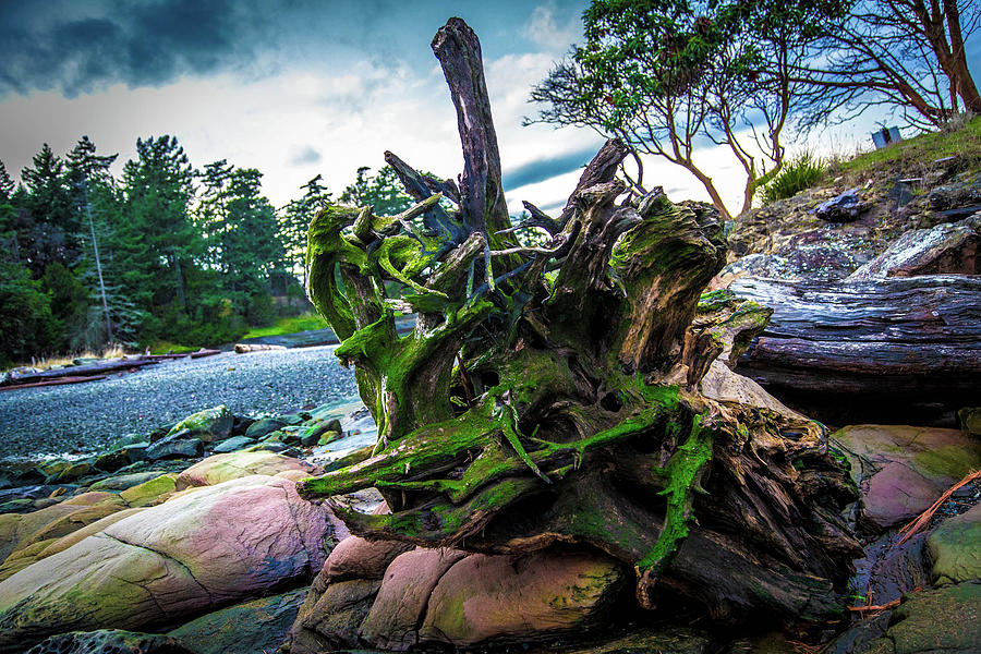 Driftwood Photograph - Brilliant Driftwood by Dan Pearce