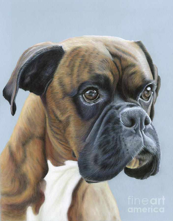 Boxer Painting - Brindle Boxer Dog - Jack by Donna Mulley