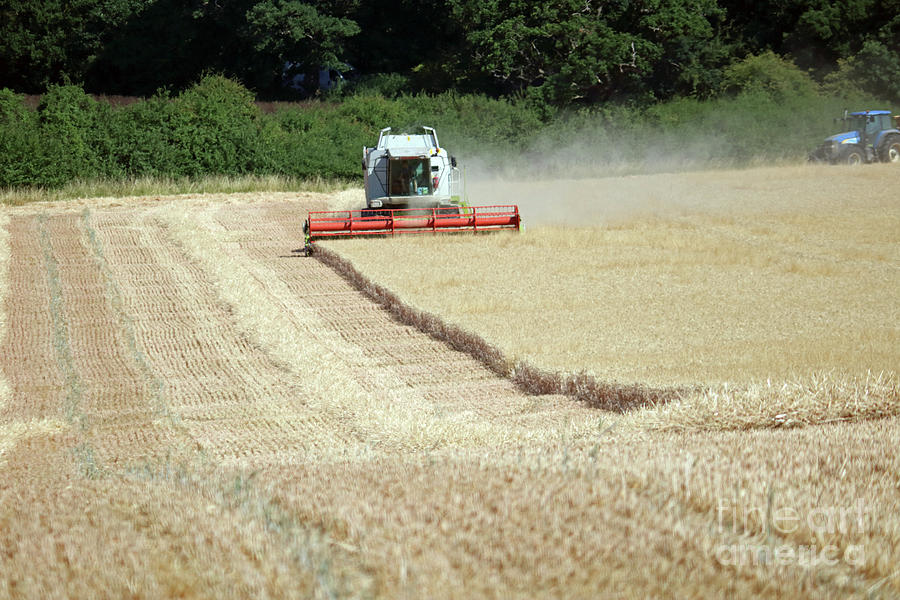 Bringing in the harvest England by Julia Gavin