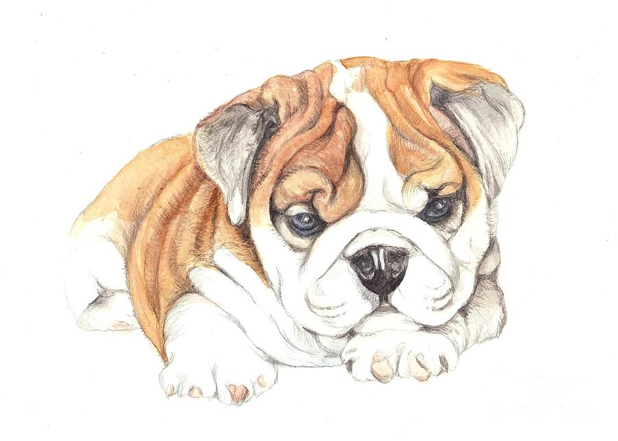 Brittish Painting - British Bulldog Puppy  by Morgan Fitzsimons