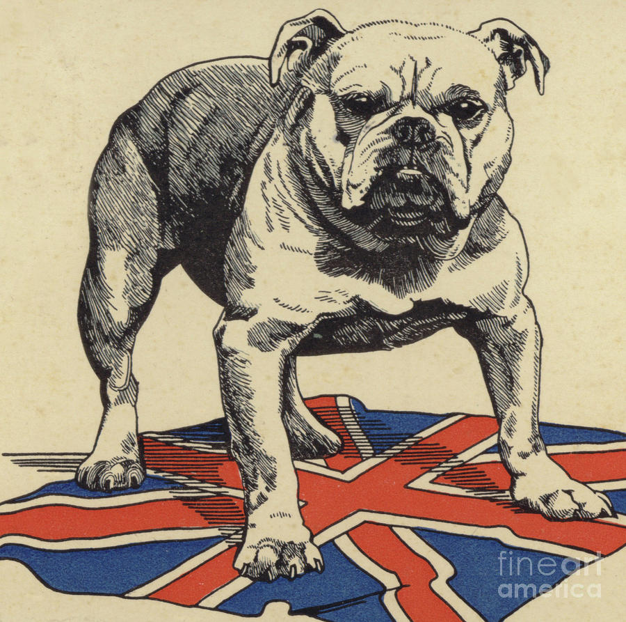British Bulldog Standing On The Union Jack Flag Drawing By