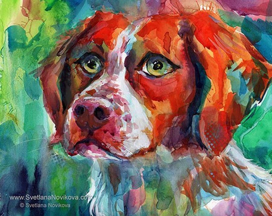 Watercolor Photograph - Brittany Spaniel Watercolor Portrait By by Svetlana Novikova
