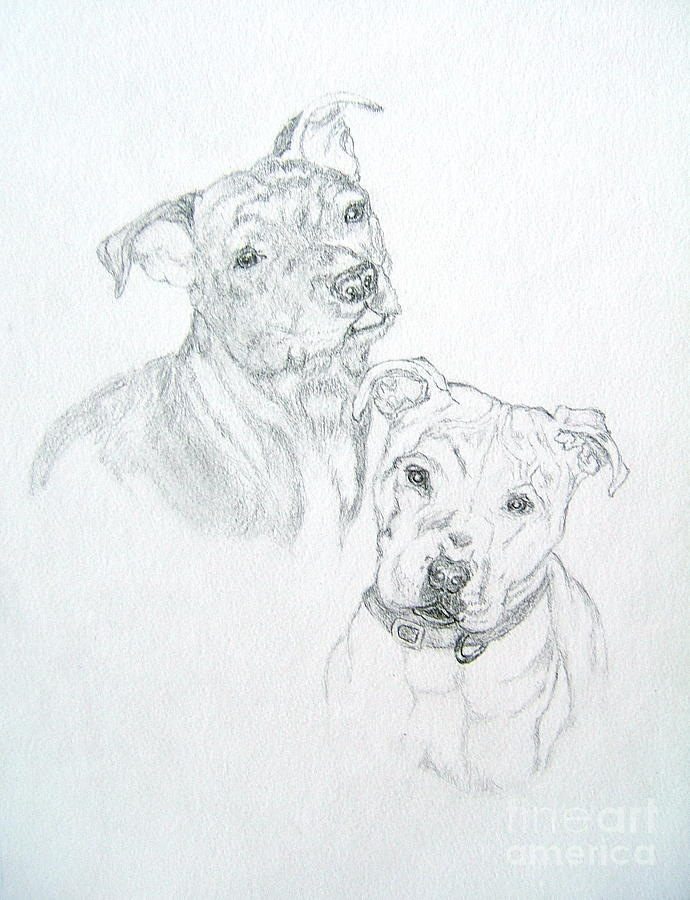 Pit Bull Pencil Drawing Drawing - Brittney by Nancy Rucker