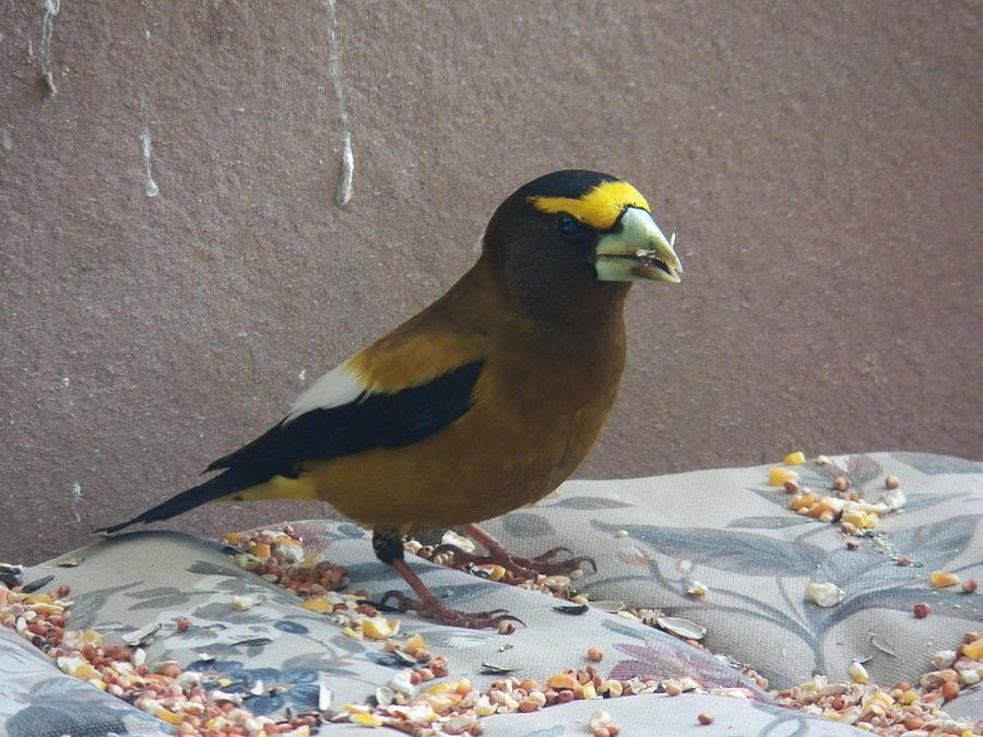 Bird Photograph - Broad Beak by Laurie Kidd