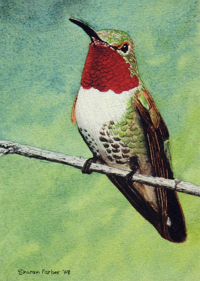 Hummingbird Painting - Broad-tailed Hummingbird by Sharon Farber