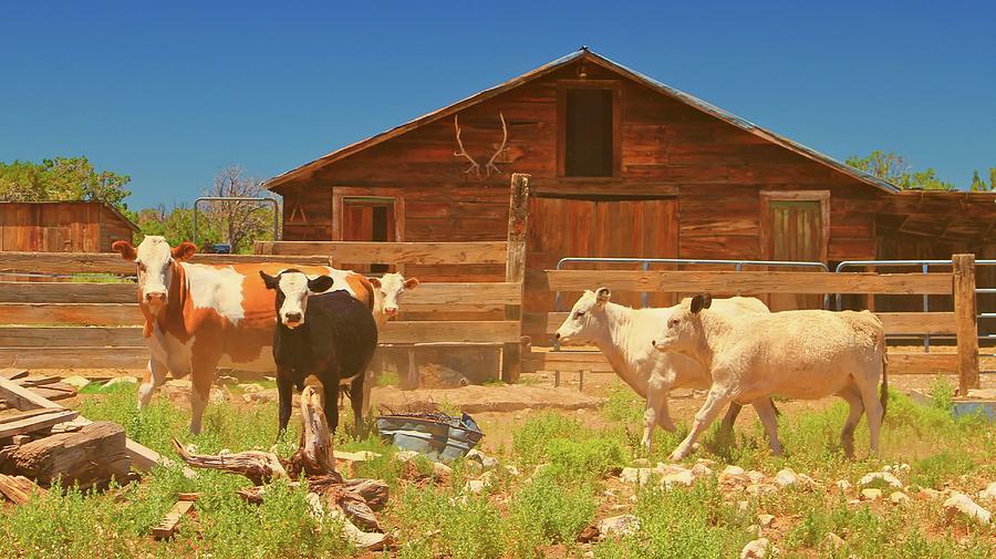 Ranch Photograph - Broken Corral Winona Arizona by Gus McCrea