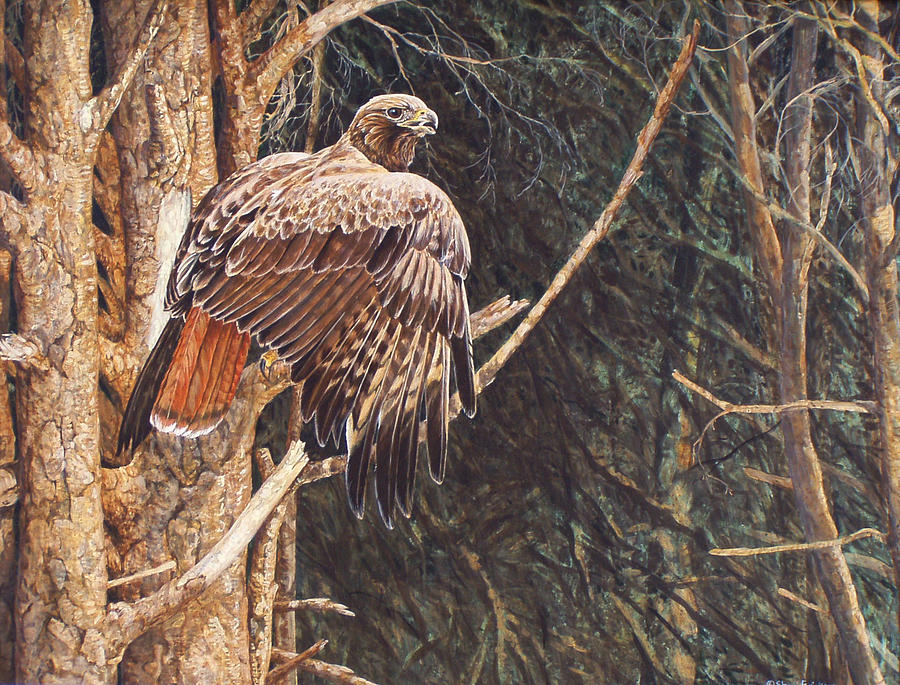 Redtail Painting - Broken Feather by Shari Erickson