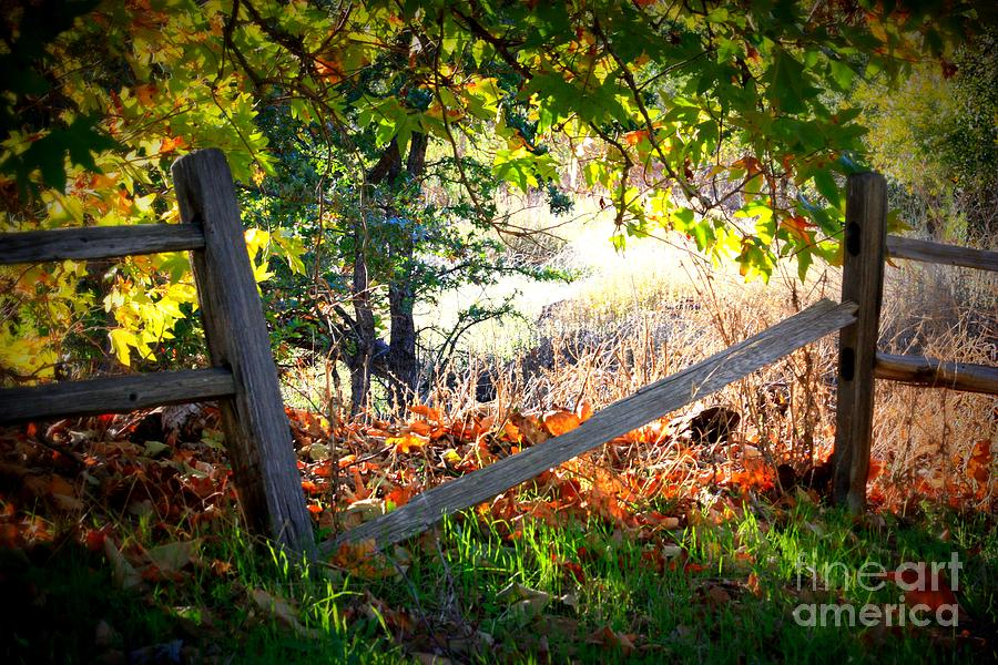 Autumn Photograph - Broken Fence In Sycamore Park by Carol Groenen