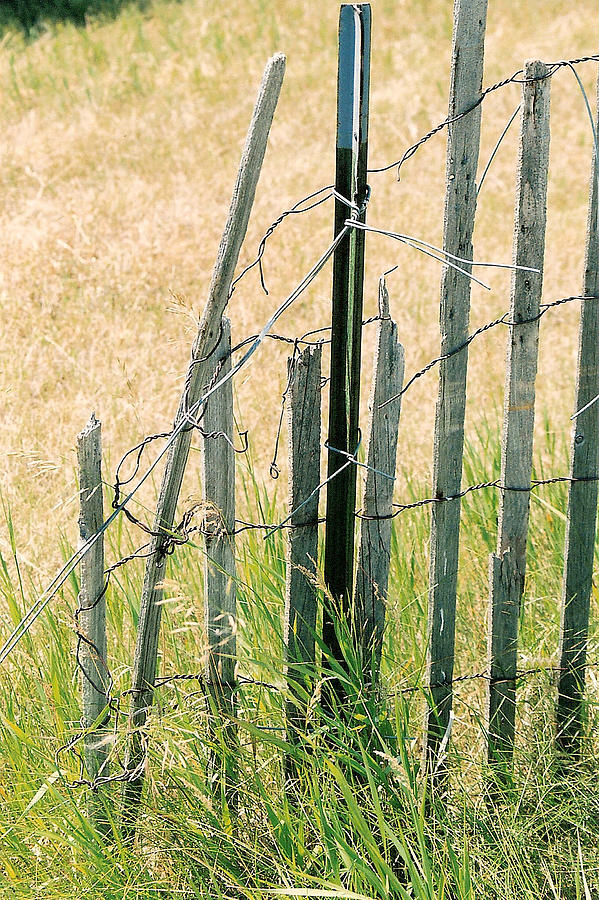 Fence Photograph - Broken Fence by Lauri Novak