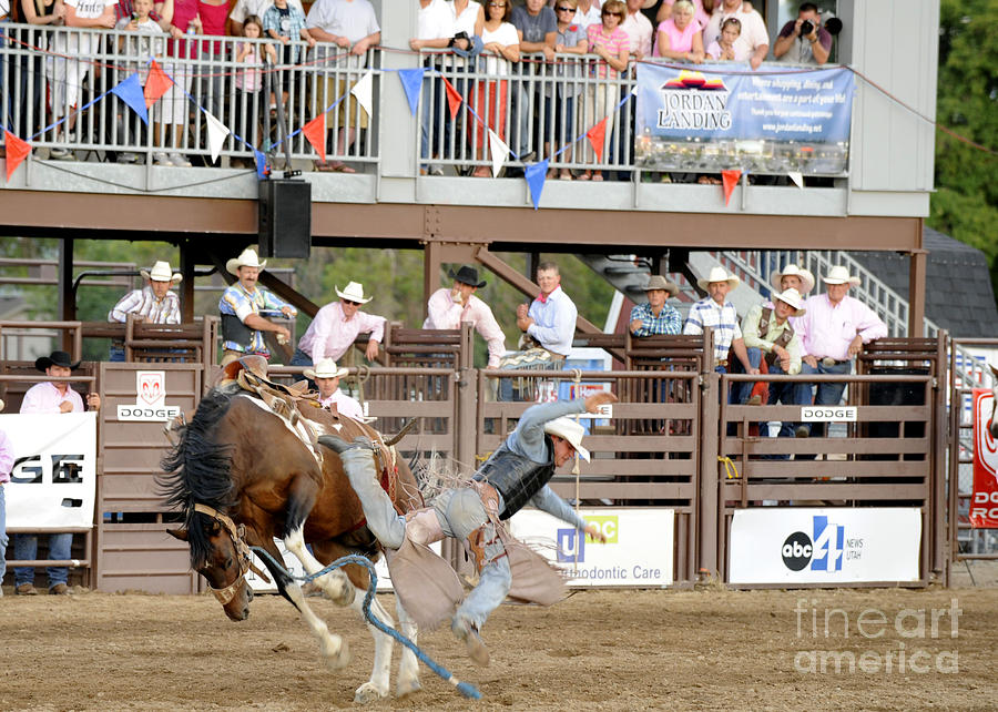 Horse Photograph - Bronc Riding by Dennis Hammer