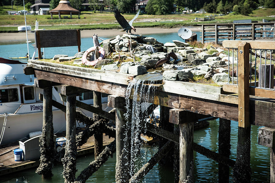 Swinomish Channel Photograph - Bronze Eagle And Water Fall by Tom Cochran