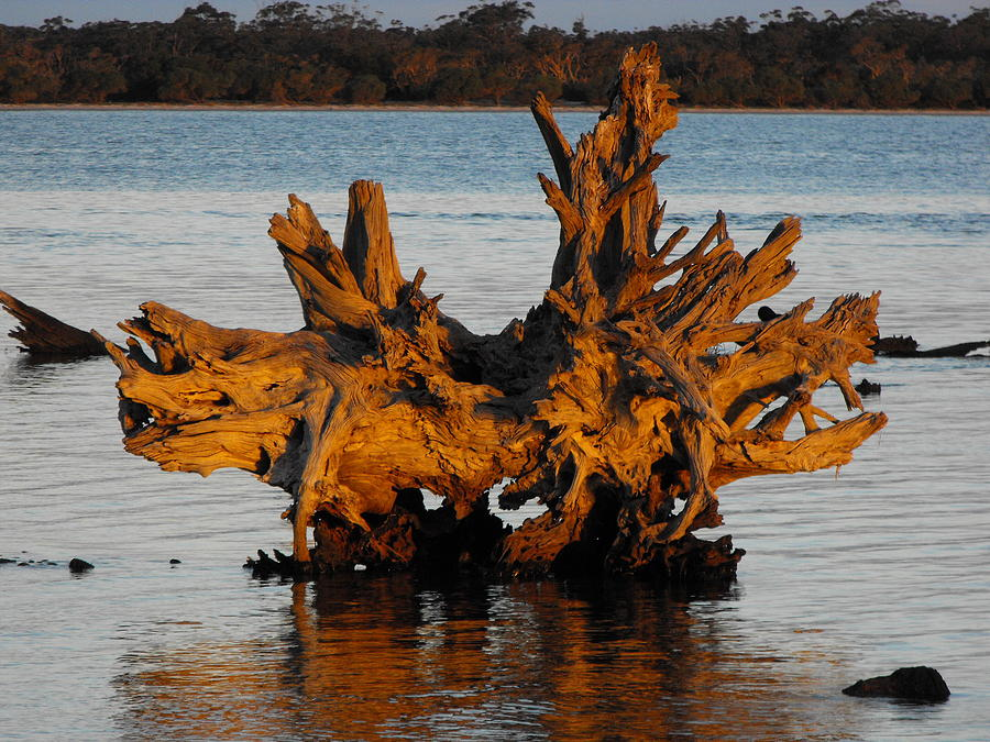 Bronzed Wood by Marlene Challis