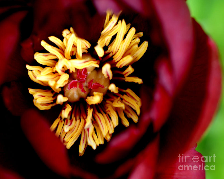 Red Photograph - Brooding II  by Valerie Fuqua