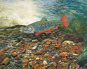 Nature Painting - Brook Trout Art Fish Art Nature Wildlife Underwater by Baslee Troutman