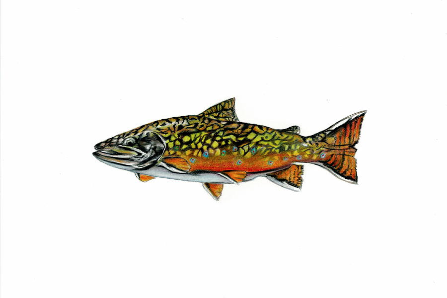 Fish Mixed Media - Brook Trout by Jim  Romeo