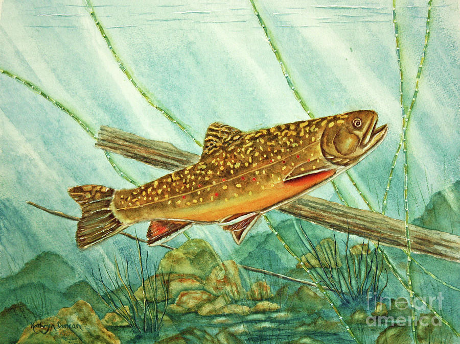 Brook Trout by Kathryn Duncan
