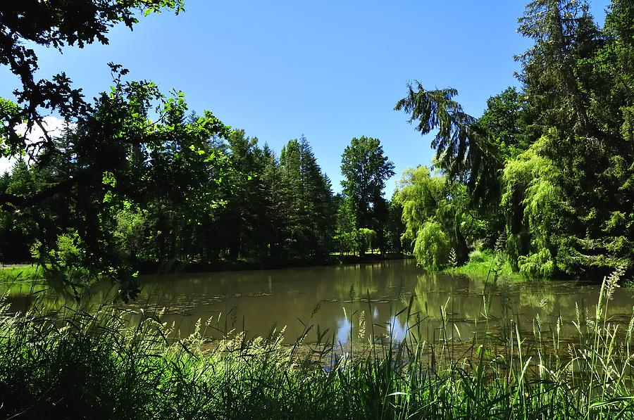Brookside Pond 1741 Photograph