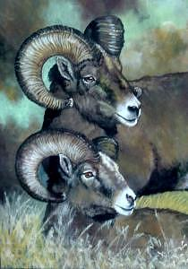 Bighorn Sheep Painting - Brothers by Syndi Michael