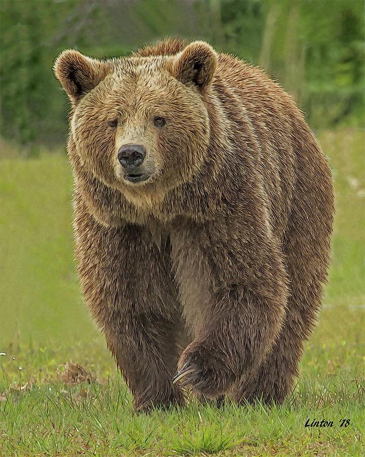 BROWN BEAR 1 by Larry Linton