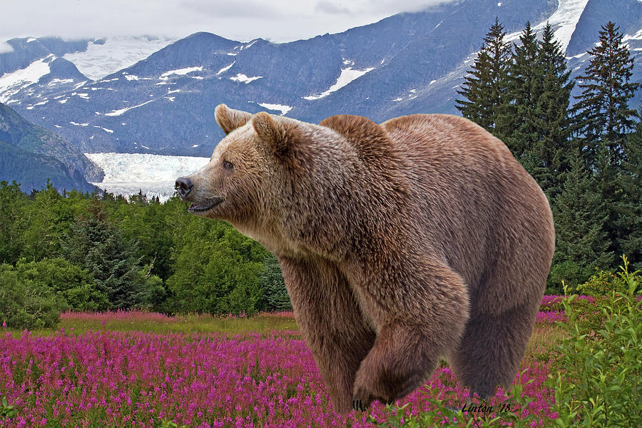 BROWN BEAR 2 by Larry Linton