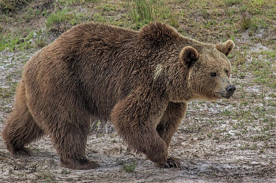 BROWN BEAR 6 by Larry Linton