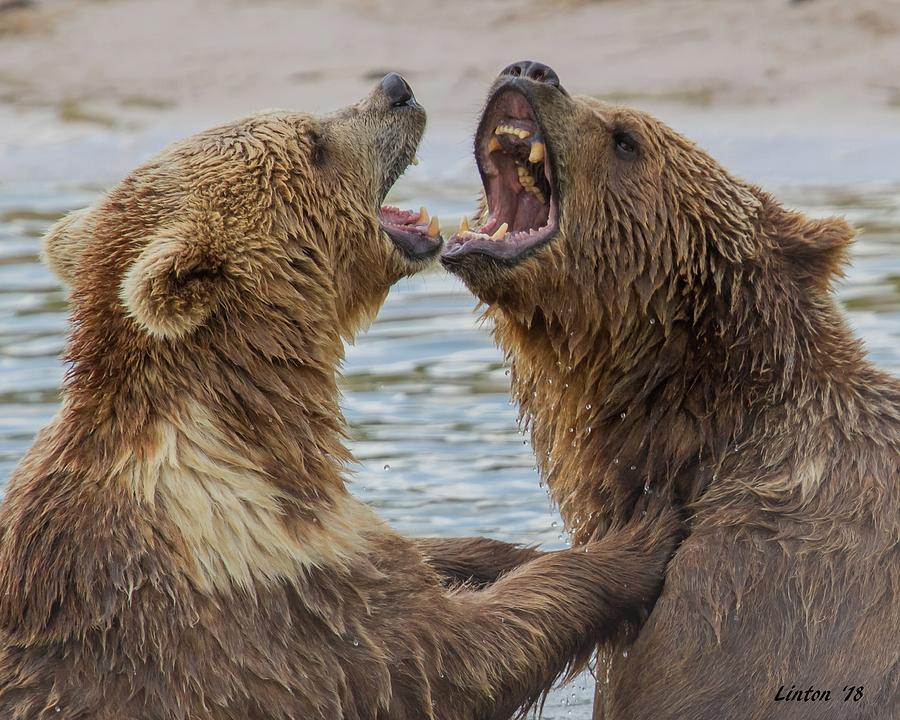 BROWN BEARS4 by Larry Linton