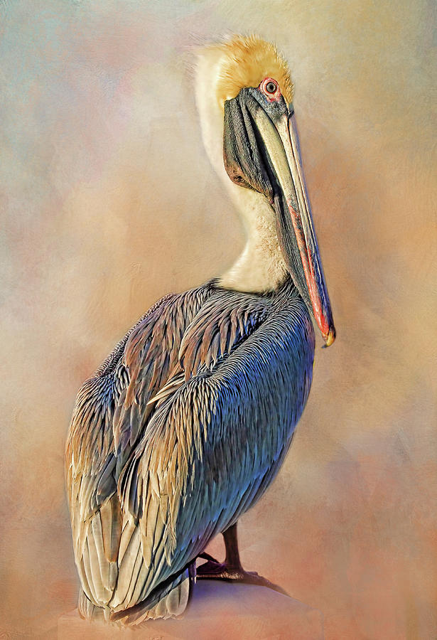 fineartamerica.com - Brown Beauty by HH Photography of Florida