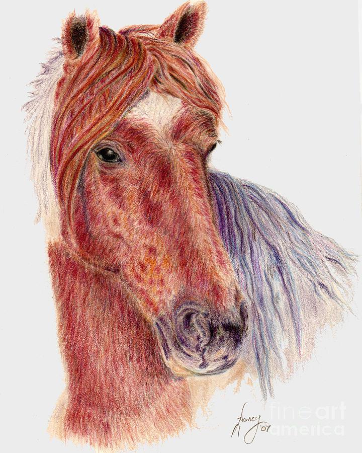 Horses Drawing - Brown Beauty by Nancy Aldrich