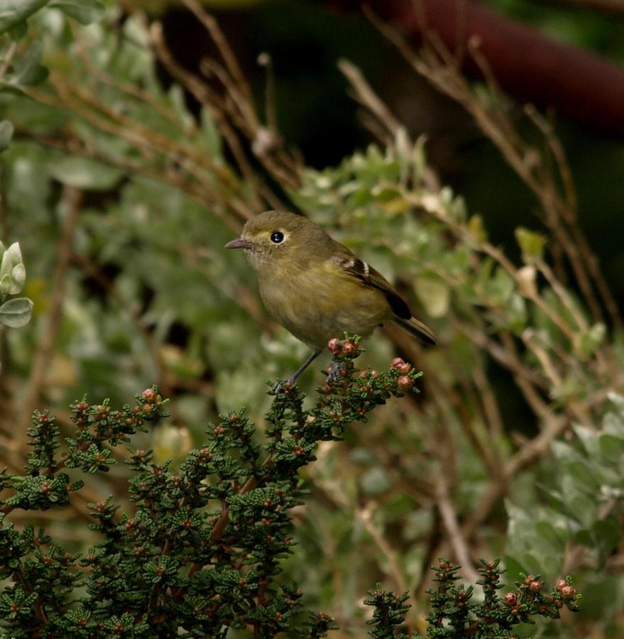 Bird Photograph - Brown Bird by Laura Allenby
