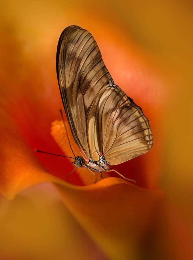 Butterfly Photograph - Brown Butterfly On Calia Flower by Jaroslaw Blaminsky