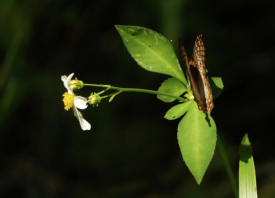 Brown butterfly on leaves by Vincent Billotto