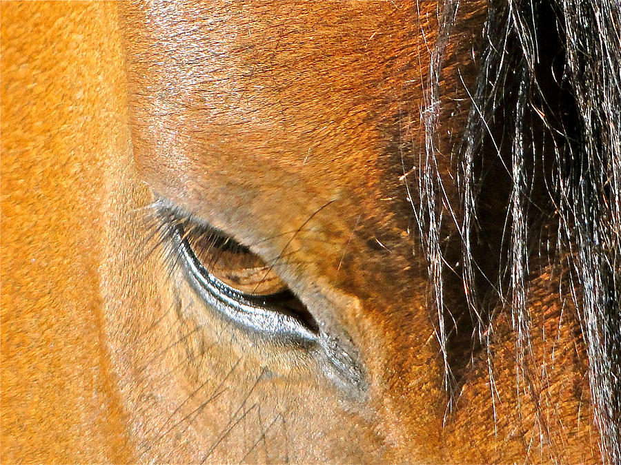 Horse Photograph - Brown-eyed Wild Horse by Liz Vernand