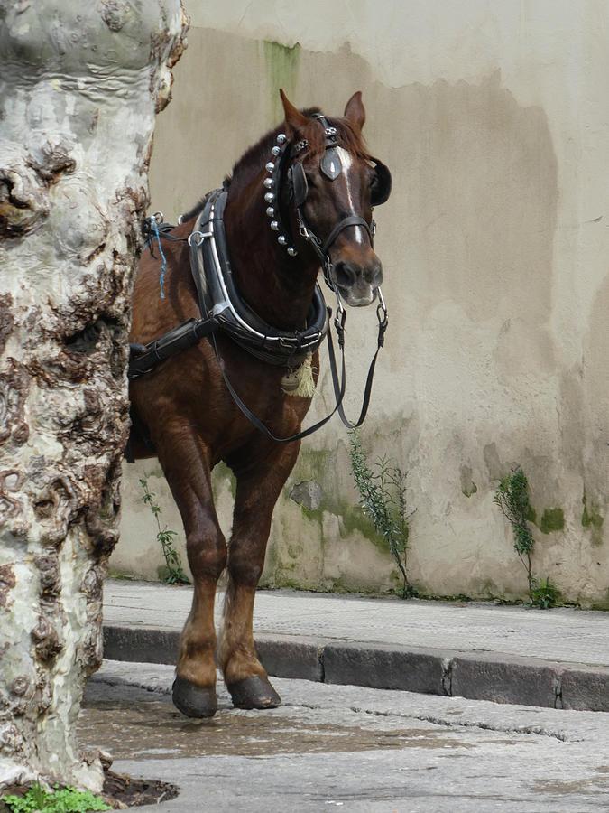 Brown Horse by Marcia Socolik