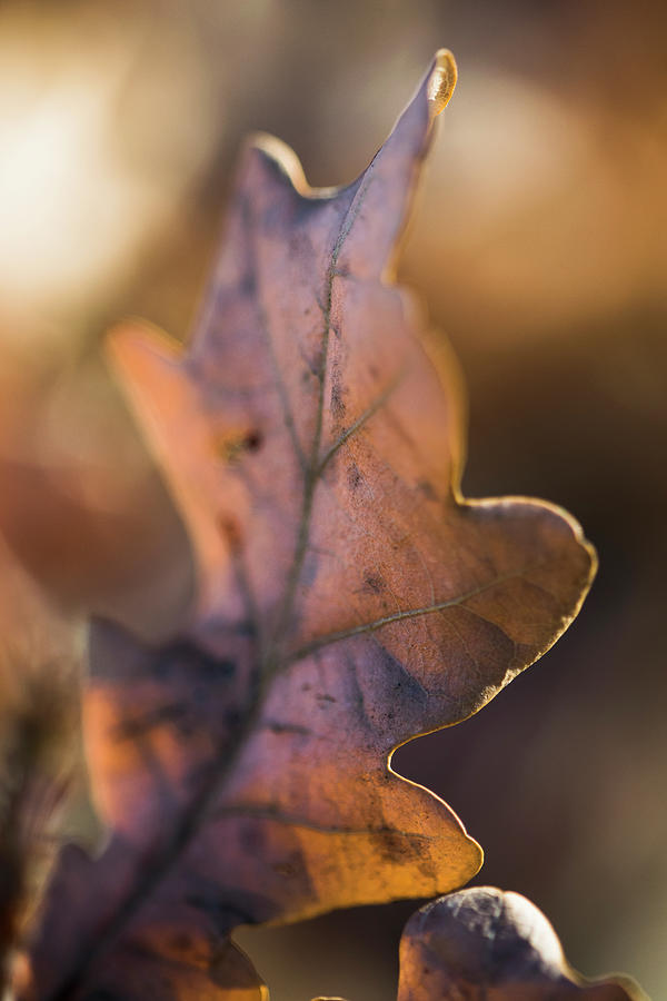 Nature Photograph - Brown Leaf by Ignacio Leal Orozco