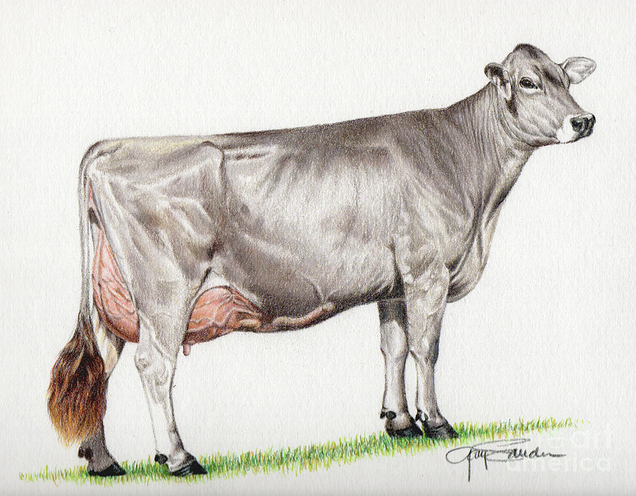 Brown Swiss Cow Painting By Gary Sauder
