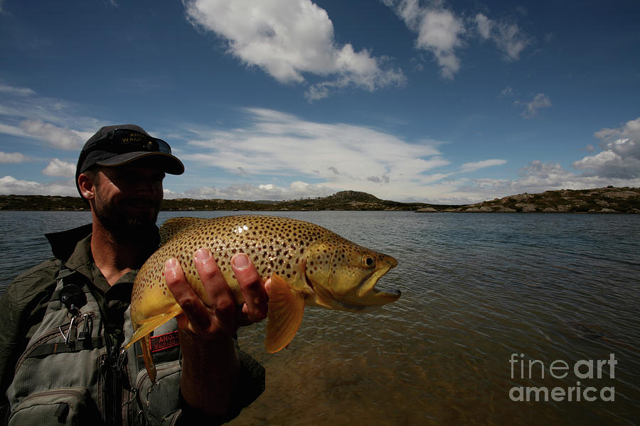 Brown Trout and Blue Skies - Australia by Julian Wicksteed