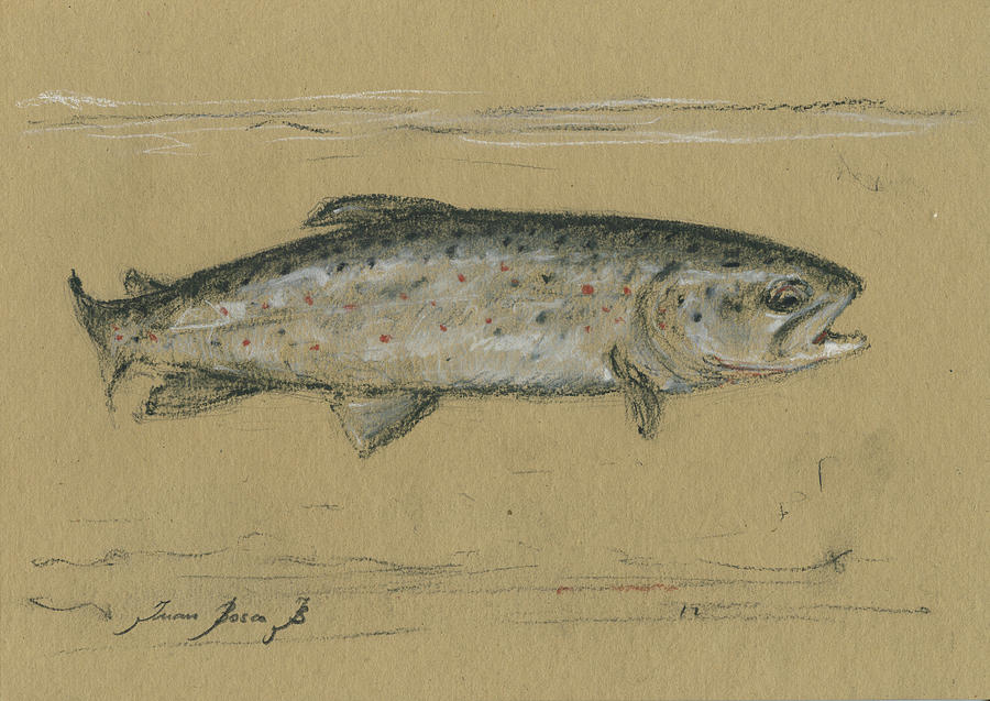 Fly Fishing River Painting - Brown Trout by Juan Bosco