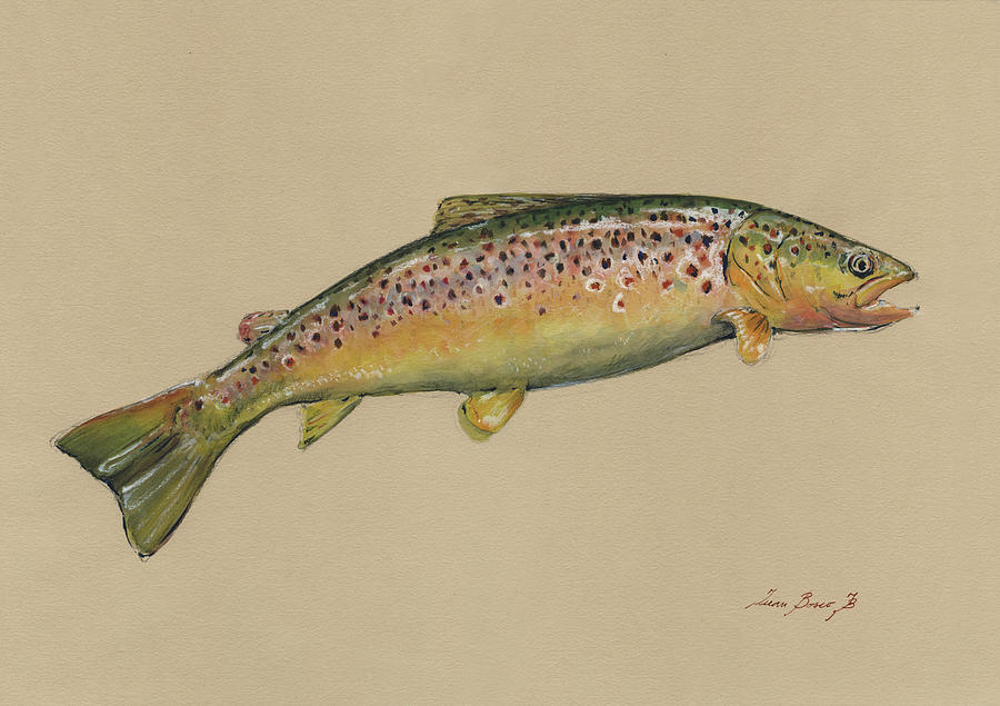Trout Flies Painting - Brown Trout Jumping by Juan Bosco