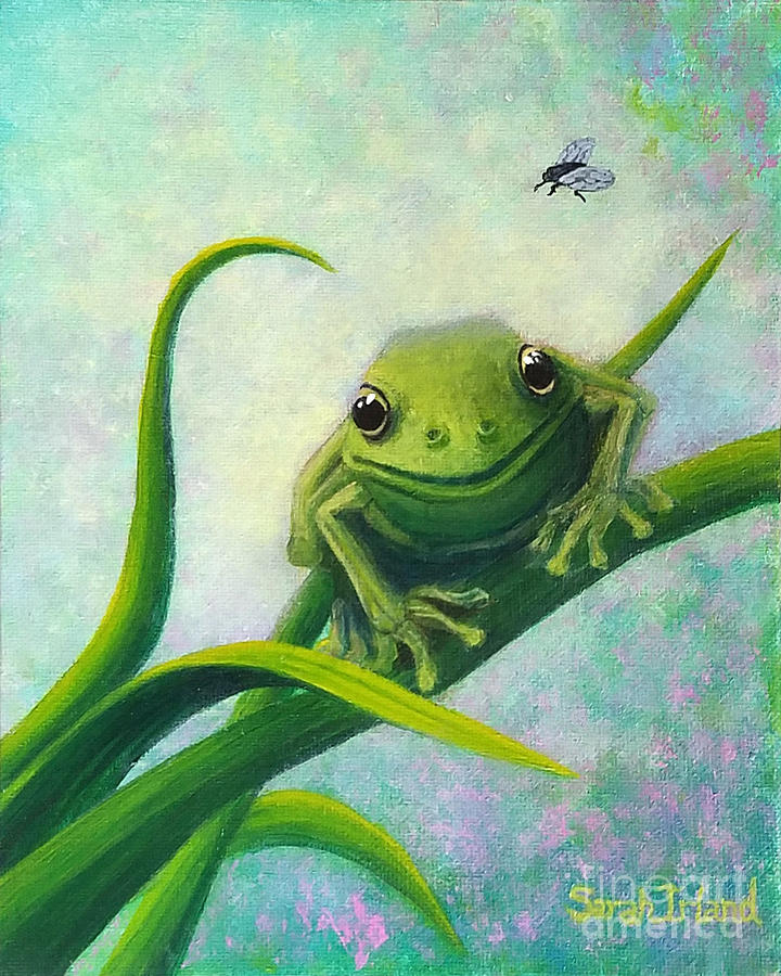 Bruce's Frog by Sarah Irland