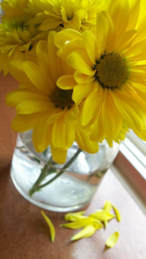 Flowers Photograph - Brunch by Laurel  Ransom
