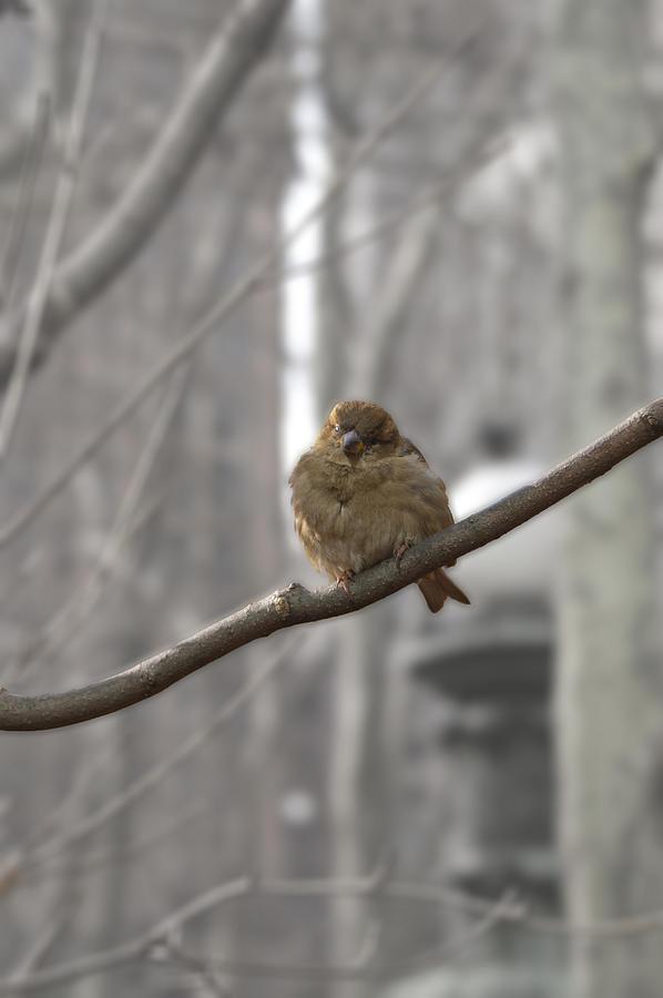 Wild Photograph - Bryant Park Bird Nyc by Henri Irizarri
