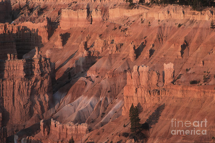 Utah Photograph - Bryce Canyon At The Golden Hour by Stan and Anne Foster