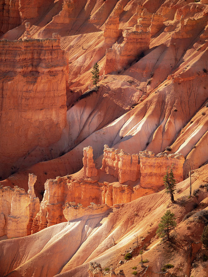 Bryce Canyon by Emily Dickey