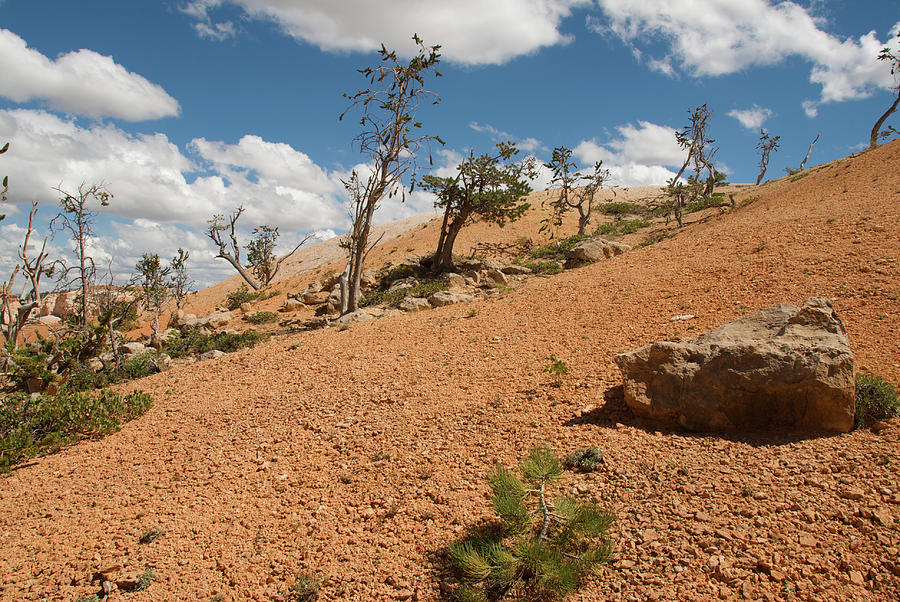 America Photograph - Bryce Canyon National Park by Andre Distel