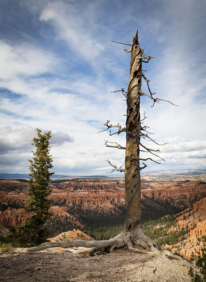 Bryce Canyon Point Trees by Kathleen Scanlan