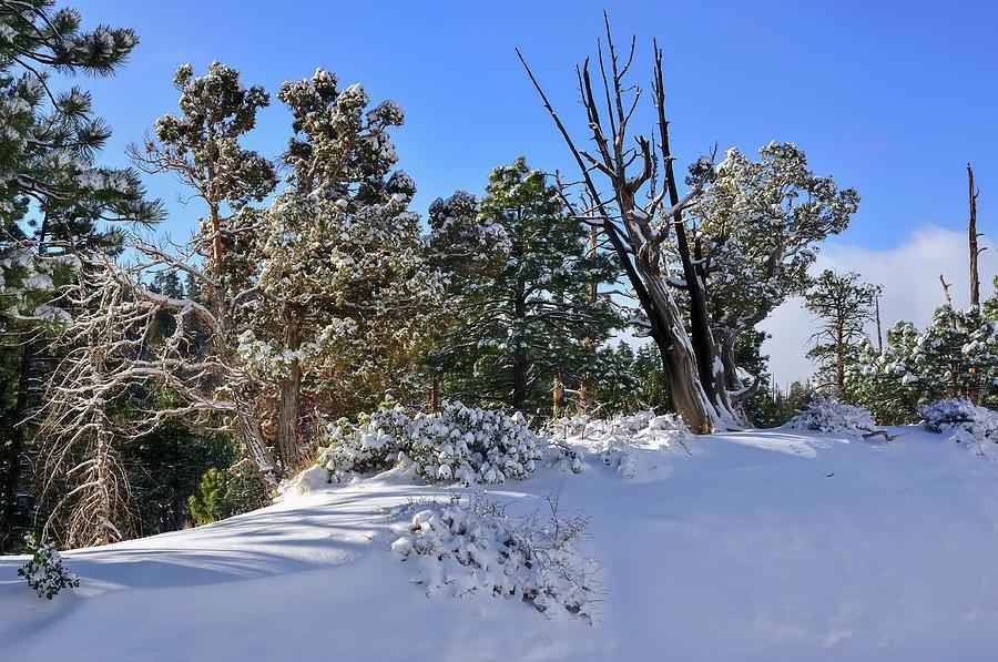 Ali Photograph - Bryce Canyon Snowfall by Jorge Moro