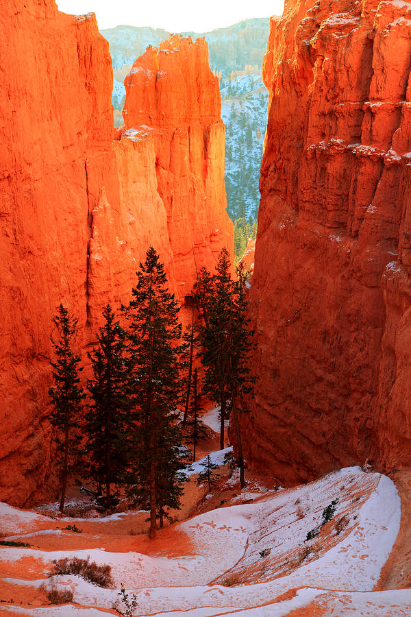 Bryce Photograph - Bryce Canyon Sunrise Glow by Pierre Leclerc Photography