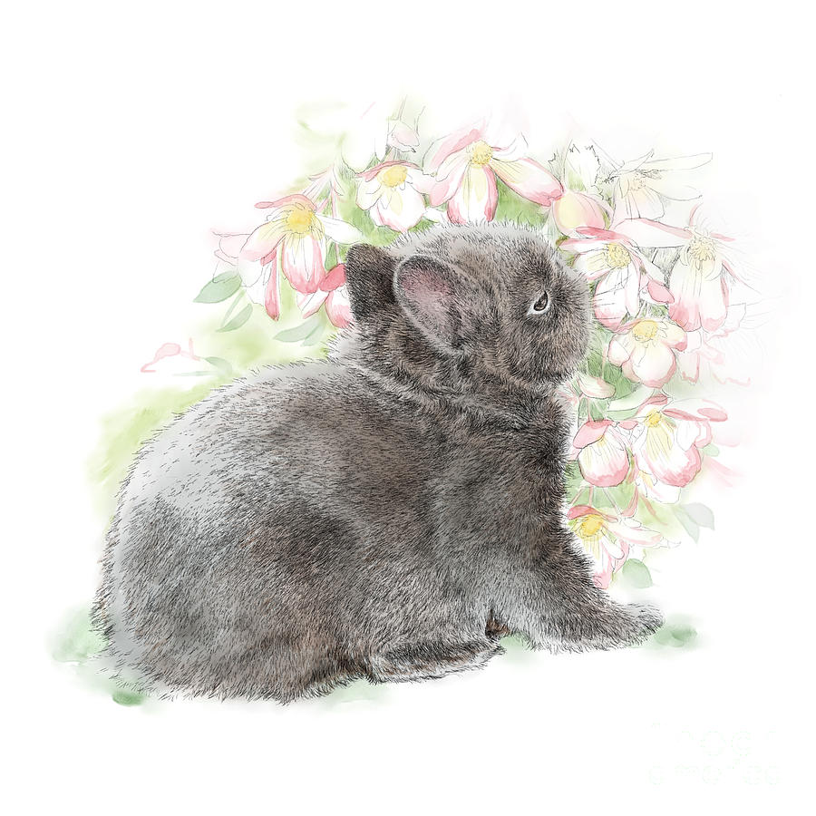 Bunny Drawing - Bu Bun 6 by Laurie Musser