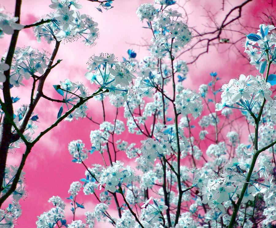 Make Believe Photograph - Bubblegum Skies by Kathy Bucari